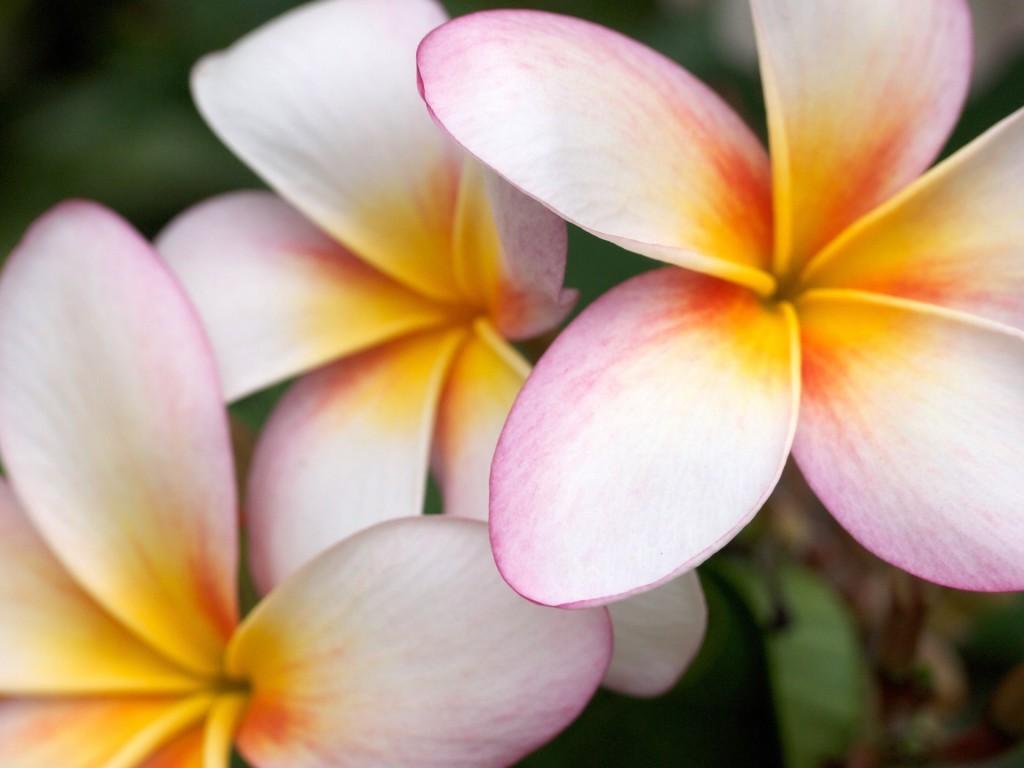 マッサージ、リラックスのイメージ写真 花
